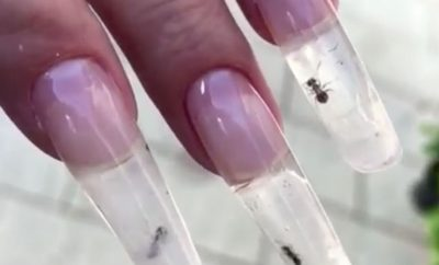 Ant Nails Nail Art Bizarre Beauty Trends On Social Media
