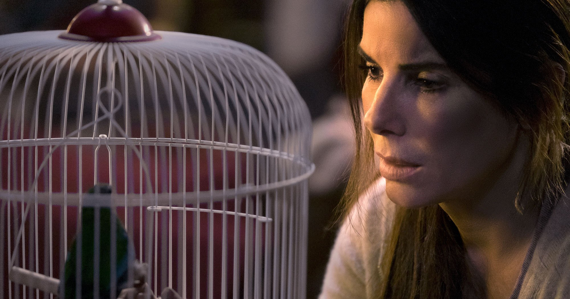 Sandra Bullock's Fans Defend Her as More Than 'That Lady