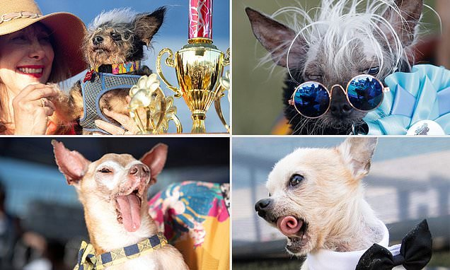 Scamp The Tramp Wins California Ugly Dog Contest Big